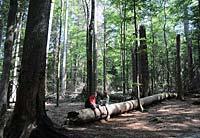 Ferienwohnungen am Nationalpark Bayerischer Wald
